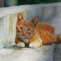 Autor Carlos Alberto Quiñones Titulo. El Gato Técnica Oleo sobre lienzo Dimensiones 50cm x 40cm
