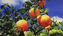 """Autora: Inma García Valderas Título: """"Naranjas"""" Dimensiones: 100 x 56 cm Técnica: Óleo sobre lienzo"""
