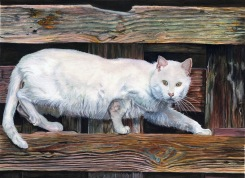 Autor: Miguel Luis Sanz Romero Titulo: El gato fonambulista. Dimensiones: 50 x 40 cm. Técnica: Acuarela.